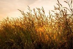 Gräs med solen 9 Royaltyfria Foton
