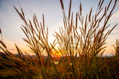 Gräs med solen 6 Royaltyfria Foton