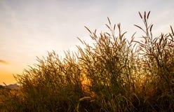 Gräs med solen 8 Arkivbilder