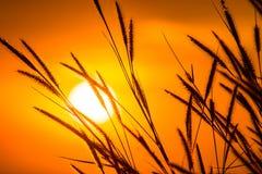 Gräs med solen 5 Royaltyfri Foto