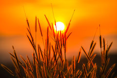 Gräs med solen Royaltyfri Bild