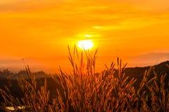 Gräs med solen Arkivbilder