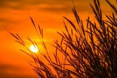 Gräs med solen 4 Royaltyfri Foto