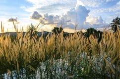 Gräs med solnedgång Arkivbilder