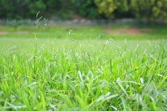 Gräs med zoomen Royaltyfria Foton