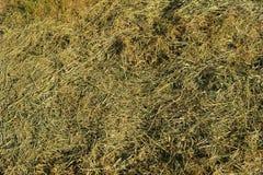 gräs mejade Arkivbild