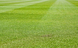 gräs mejat vått Royaltyfri Bild