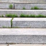 Gräs mellan moment Arkivfoto