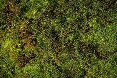 Gräs mossa Fotografering för Bildbyråer