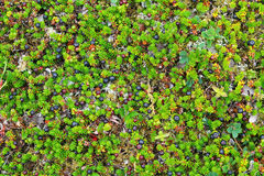 Gräs, mossa och bär Arkivbilder