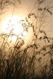 Gräs mot solljus över skybakgrund Arkivfoto