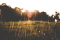Gräs när solnedgång Royaltyfria Bilder