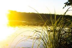 Gräs nära floden i solljuset royaltyfri bild