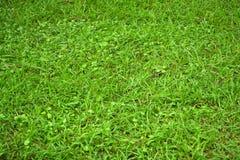 Gräs Natur tecknad illustration för fältgräshand royaltyfri bild