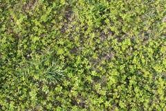 Gräs ny gräsgreenfjäder abstrakt bakgrundsnatur Royaltyfria Bilder