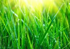 Gräs Nytt grönt gräs med closeupen för daggdroppar arkivbilder