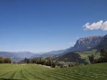 Gräs och berg i Dolomites royaltyfria bilder