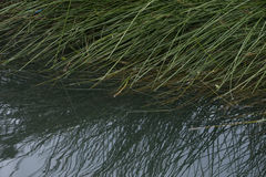 Gräs och bevattna royaltyfria foton