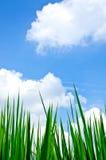 Gräs och blå sky Arkivbild