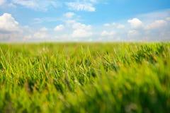 Gräs och blåttsky Fotografering för Bildbyråer