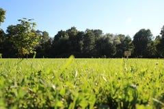 Gräs och blåttsky royaltyfria foton