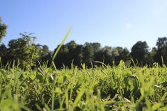 Gräs och blåttsky arkivbilder