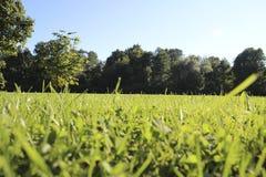 Gräs och blåttsky arkivbild