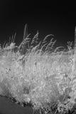 Gräs och blommor i infrarött ljus Arkivfoton