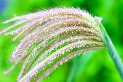 Gräs och dagg Royaltyfria Bilder
