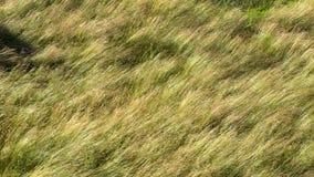 Gräs och fält Royaltyfri Bild