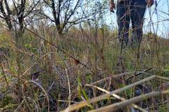 gräs och fot i bakgrunden Fotografering för Bildbyråer