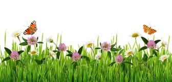 Gräs och gräns för lösa blommor med fjärilar Royaltyfria Bilder