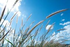 Gräs- och himmelmolnbakgrund Arkivfoto