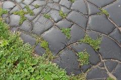 Gräs- och jordningstexturbakgrund fotografering för bildbyråer