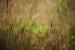 Gräs och lövverk i färgbakgrund och suddighet Royaltyfri Foto