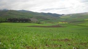 Gräs och moln Fotografering för Bildbyråer