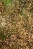 Gräs och pollen Royaltyfria Foton
