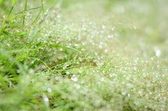 Gräs- och regndroppe royaltyfria foton