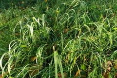 Gräs och sidor Arkivbild
