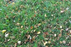 Gräs och sidor Royaltyfria Foton