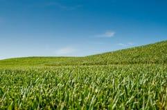 Gräs och sky arkivfoton