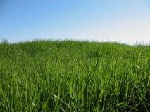 Gräs och sky Arkivfoto