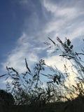 Gräs och sky Fotografering för Bildbyråer