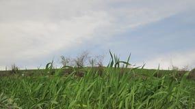 Gräs och sky Arkivbild