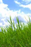 Gräs och skyen Royaltyfri Bild