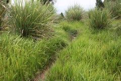 Gräs och slingor Royaltyfri Bild