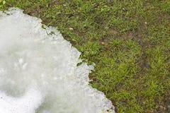 Gräs och smältande snö Arkivfoto