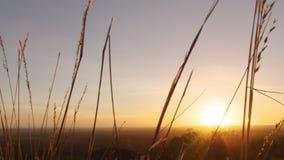 Gräs- och solnedgångskott arkivfilmer