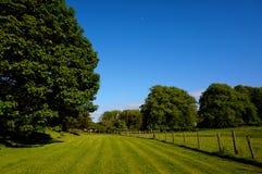 Gräs och staket royaltyfria bilder