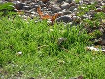 Gräs och stenar Royaltyfria Bilder